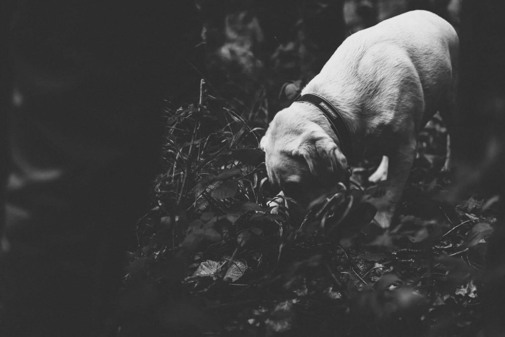 Hazel the PTSD dog