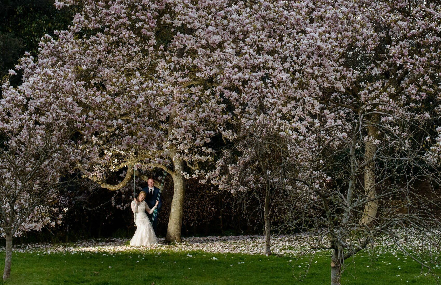 magnolia-tree-Brympton-House